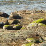 ふるさと納税 貴重な岩海苔の十六島(うっぷるい)海苔セット!